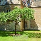 牛顿的苹果树