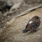 可怜的小鸟