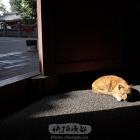 光影下的猫咪