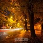 锦里西路的银杏
