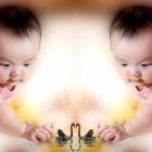 婴儿与天鹅