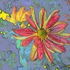 菊—彩色素描