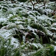 成都下雪了