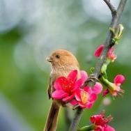 红花俊鸟映彩...