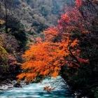 喇叭河彩林
