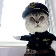 我是猫警官