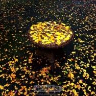 圆桌上的金叶...
