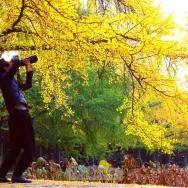 摄影师拍秋