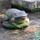石【青蛙】