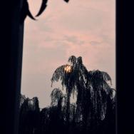 《日落柳梢》...