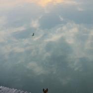 《江边观景》...