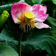 花瓣虽缺美不...
