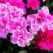 小区的花真美...