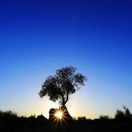 光影记忆•西...